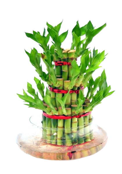three_layer_bamboo_plant-removebg-preview
